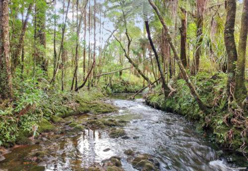 Okaihau, RIVER, STUNNING BUSH & GRAZING 3.59ha, Property ID: 793669 | Barfoot & Thompson