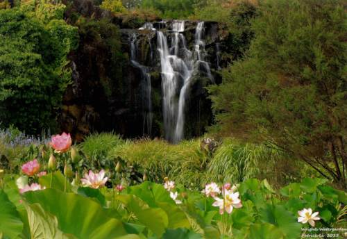 Patumahoe, Well-known Wrights Watergardens For Sale, Property ID: 804088 | Barfoot & Thompson
